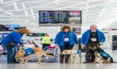 Edinburgh Airport hosts guide dog training day